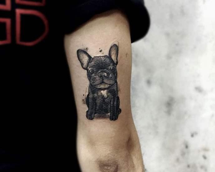 маленькая собака на локте